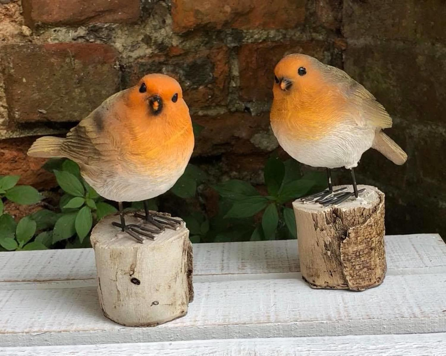 Pair of Robins on a log