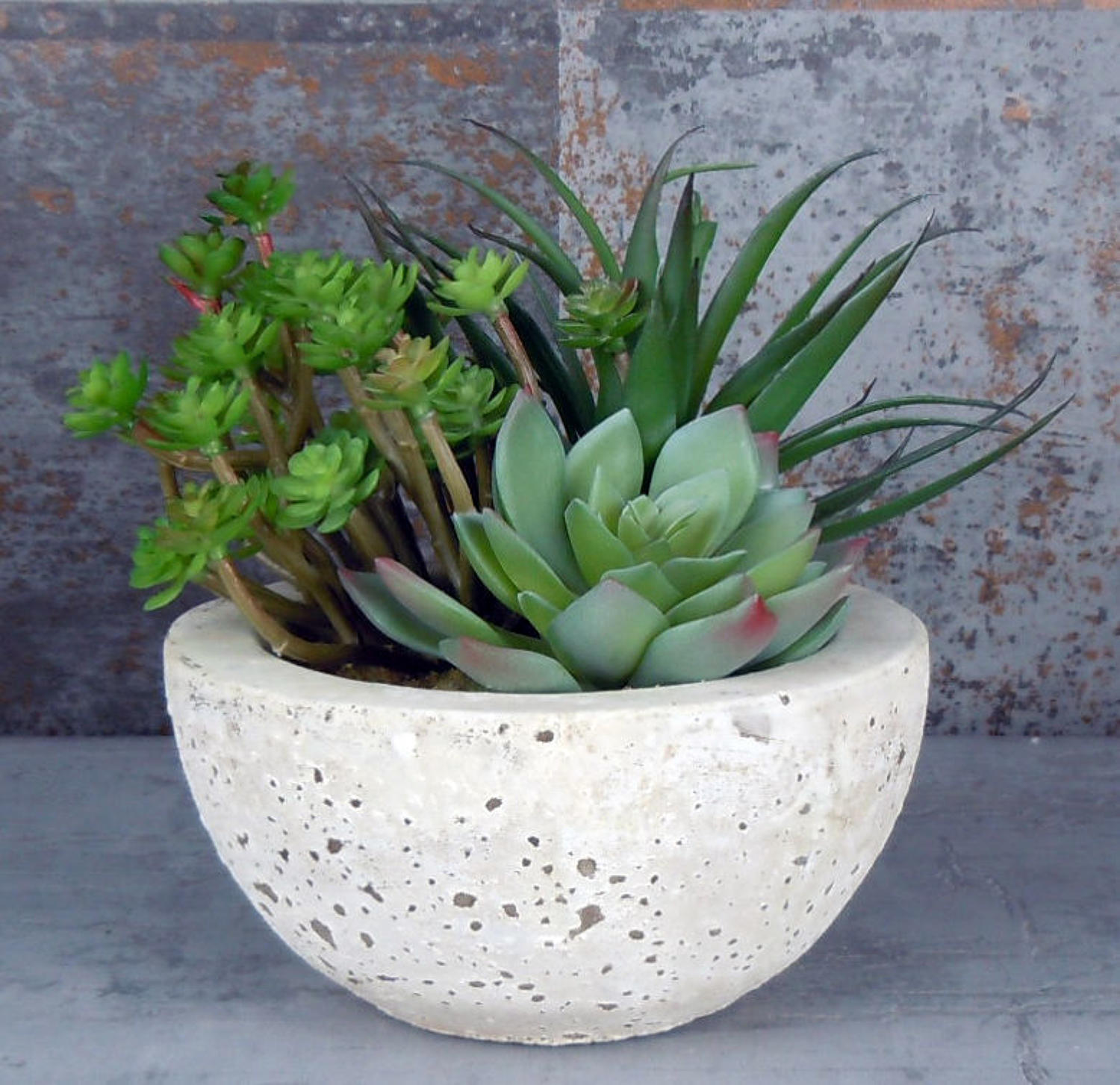 Succulents in cement bowl