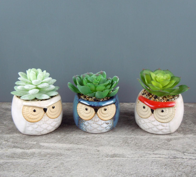 Owl pot with Succulent
