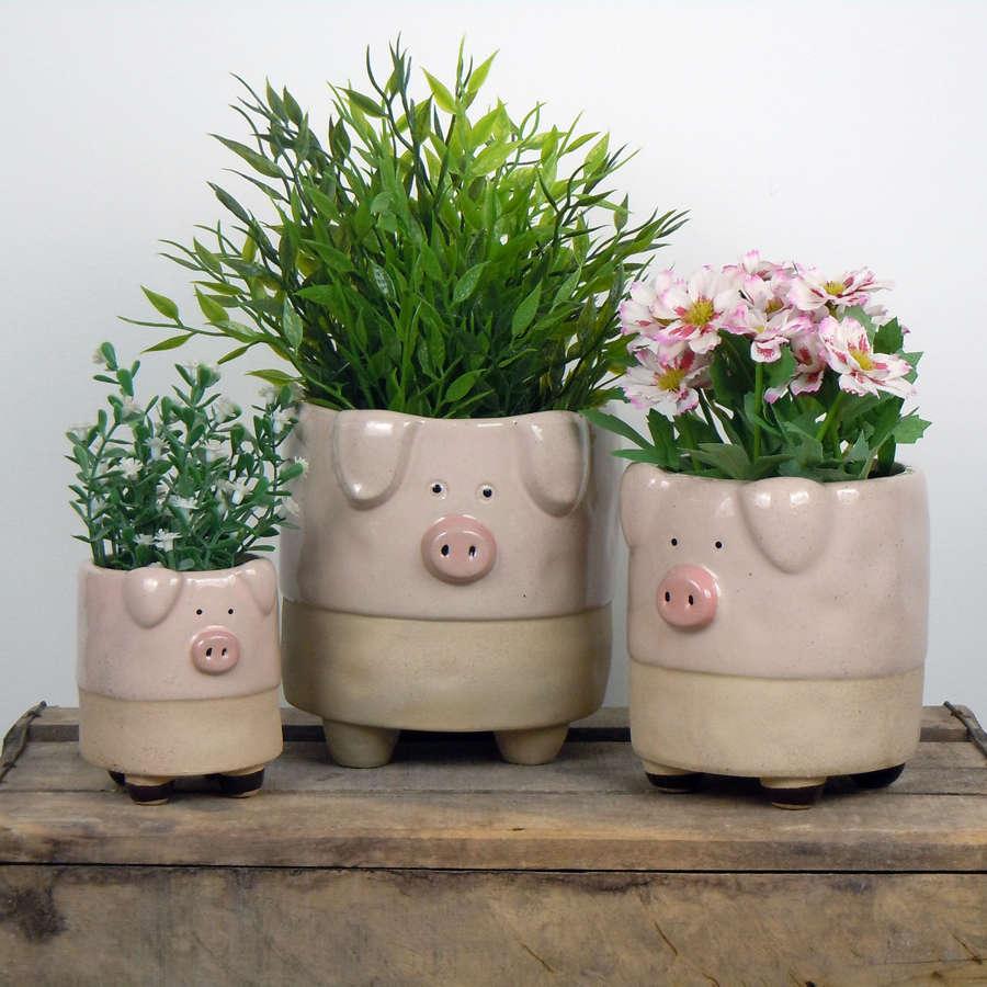 Semi glazed Pig plant pots