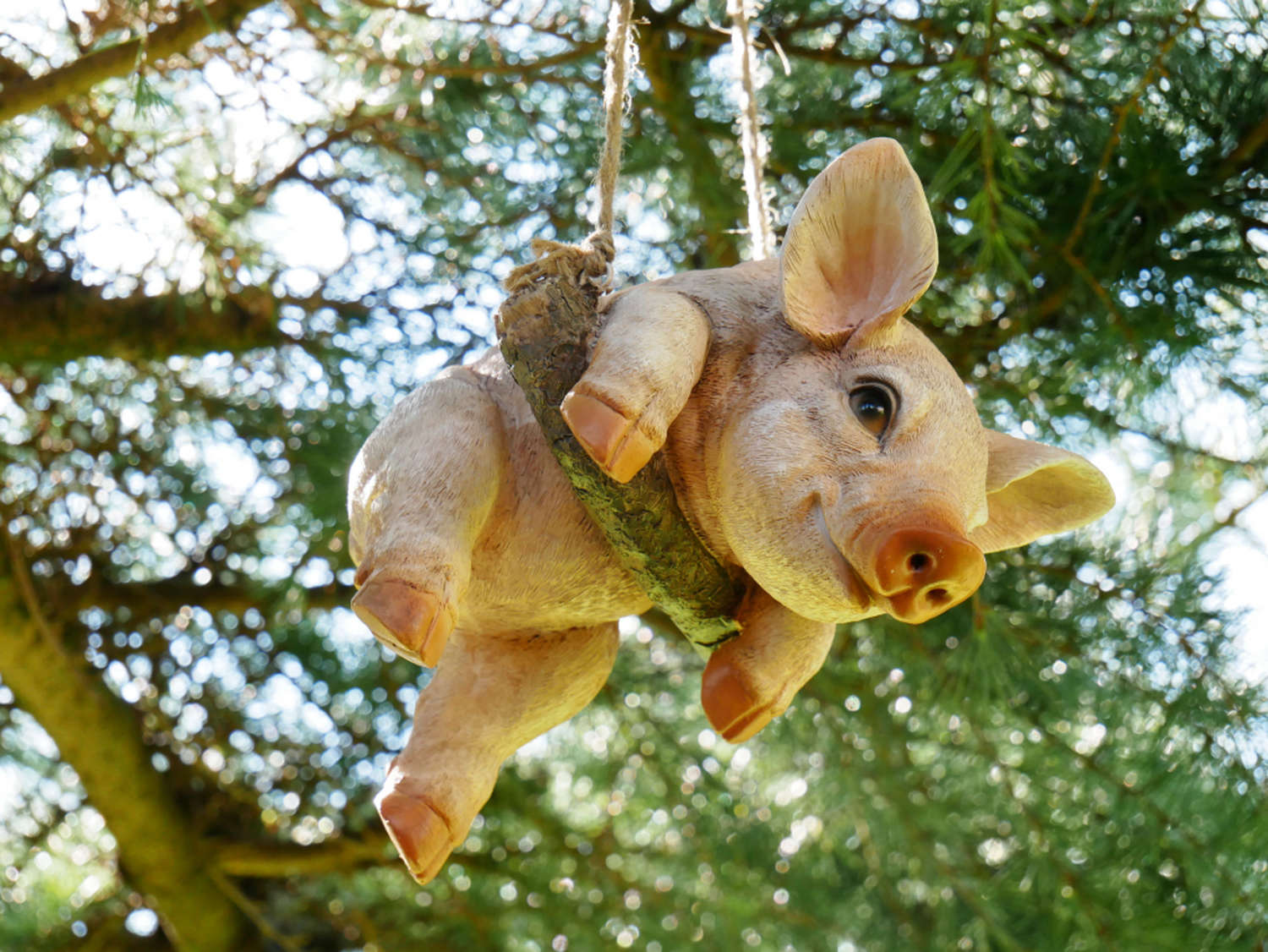 Hanging Pig on a rope swing