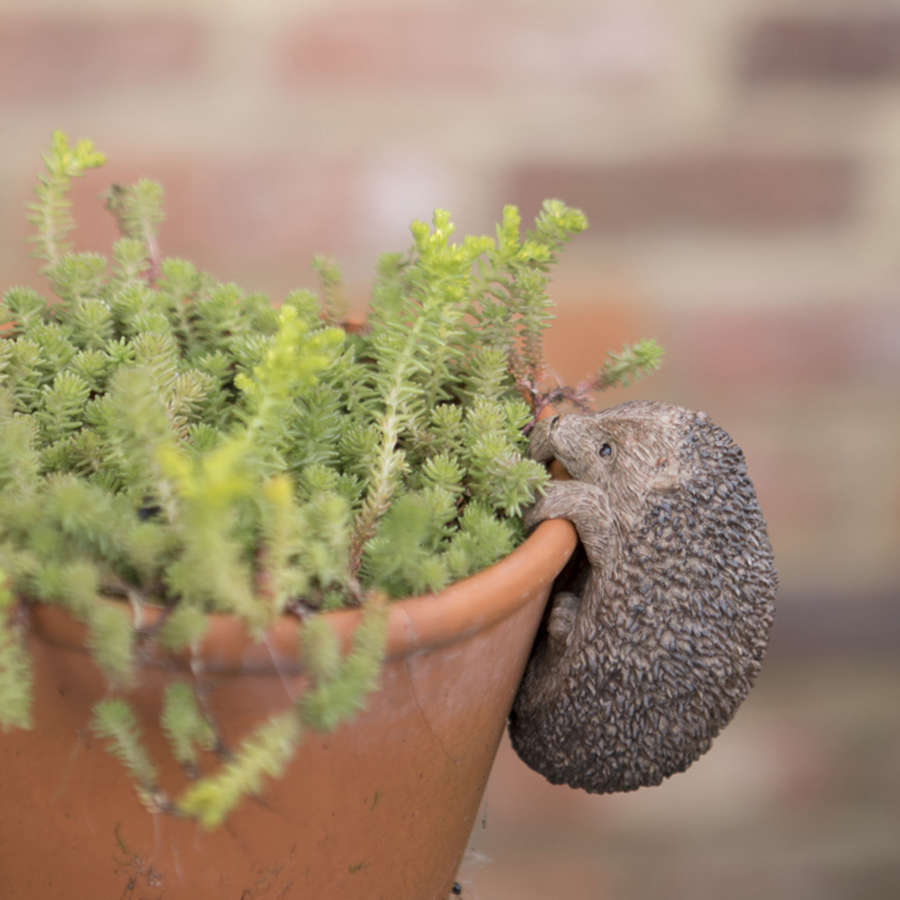 Hedgehog pot hanger