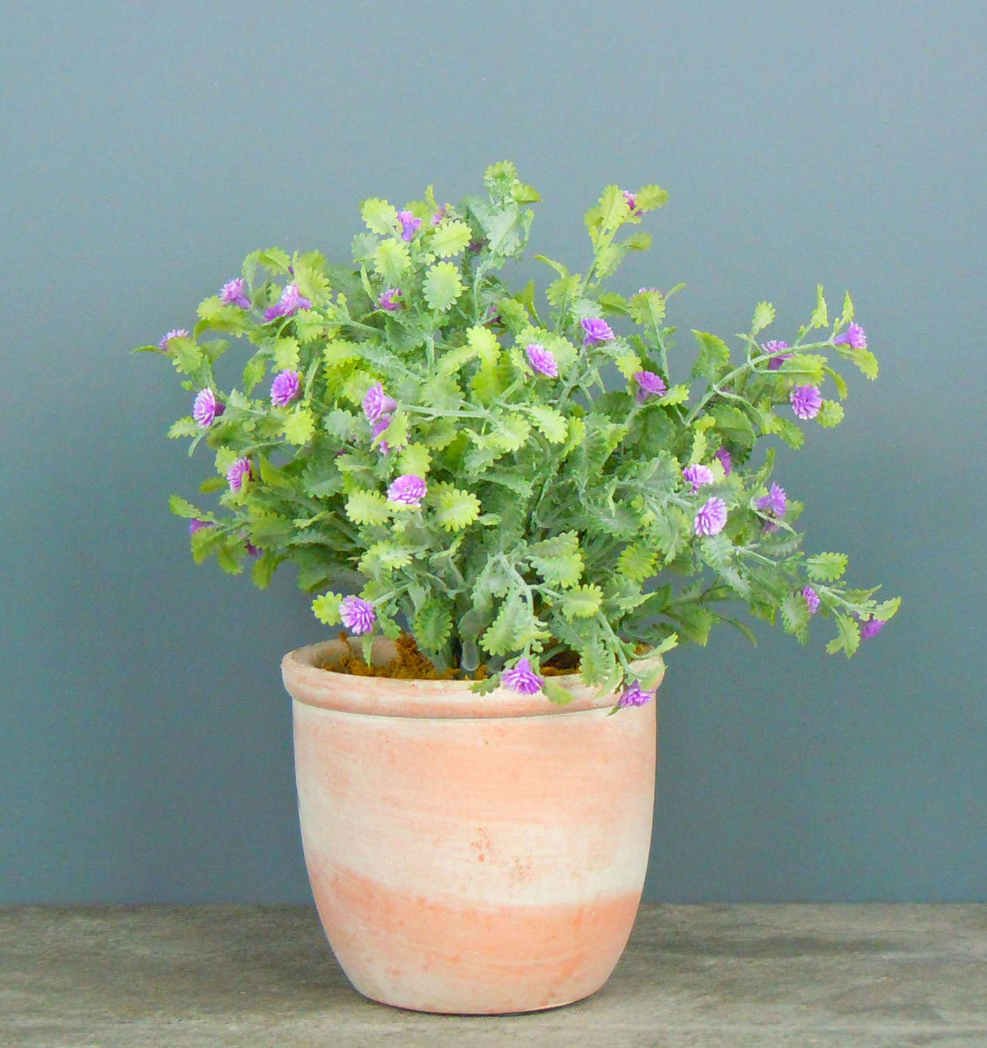 Mini potted lilac coloured flowers
