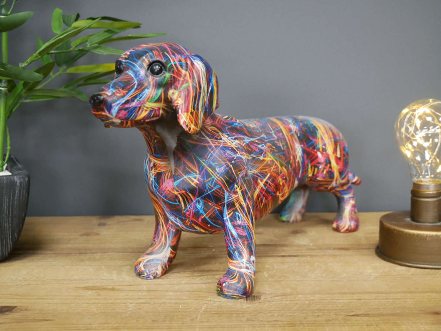 Multi coloured Dachshund Dog