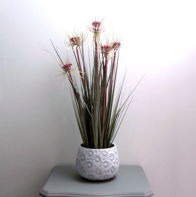 Sunny Grass plant