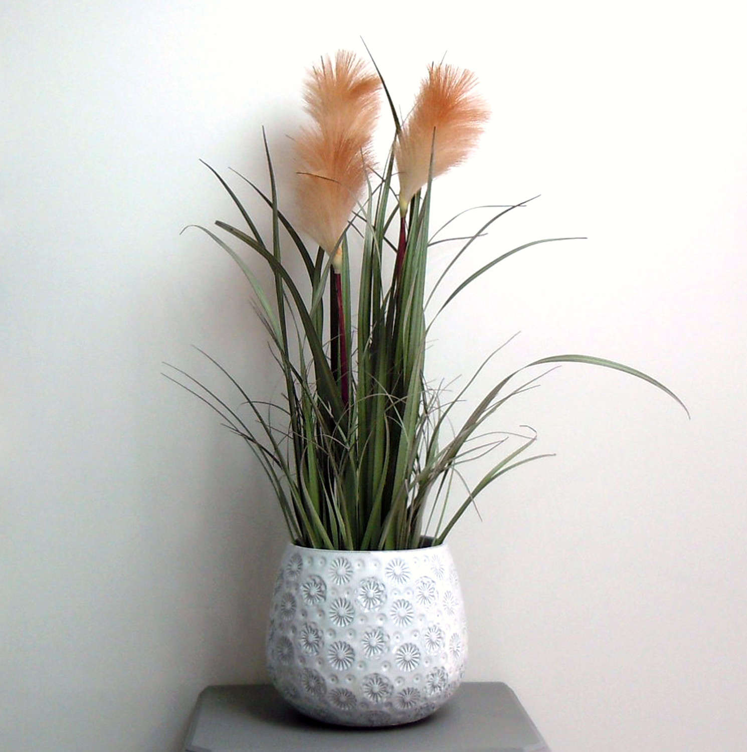 Feather Reed plant large