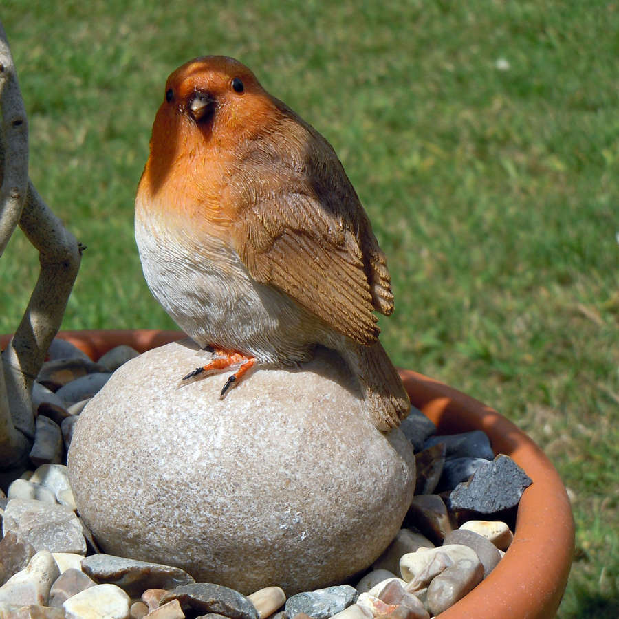 Robin sitting on a stone