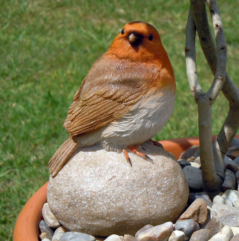 Robin sitting on a stone