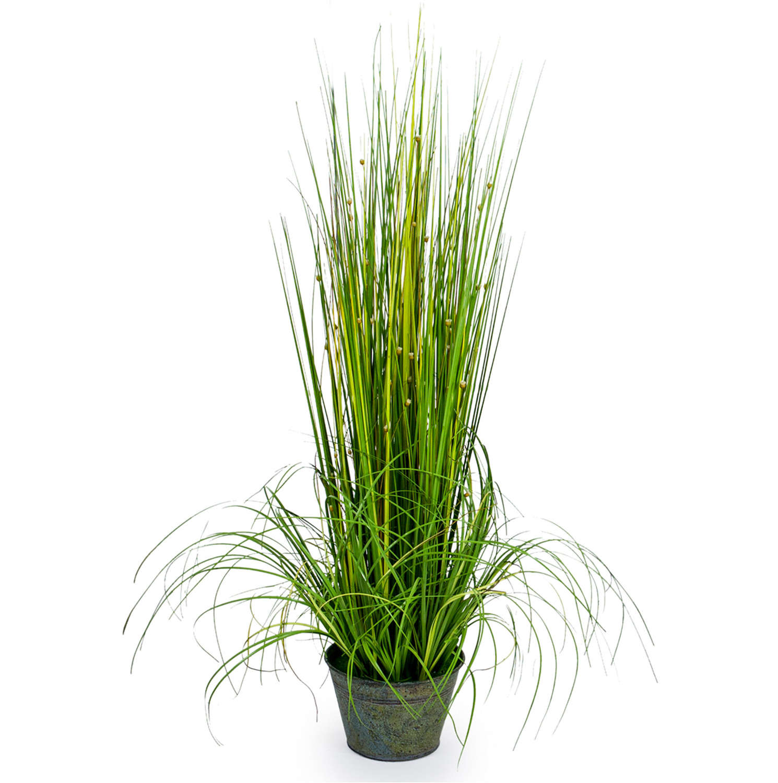 Ornamental Grass plant in galvanised pot