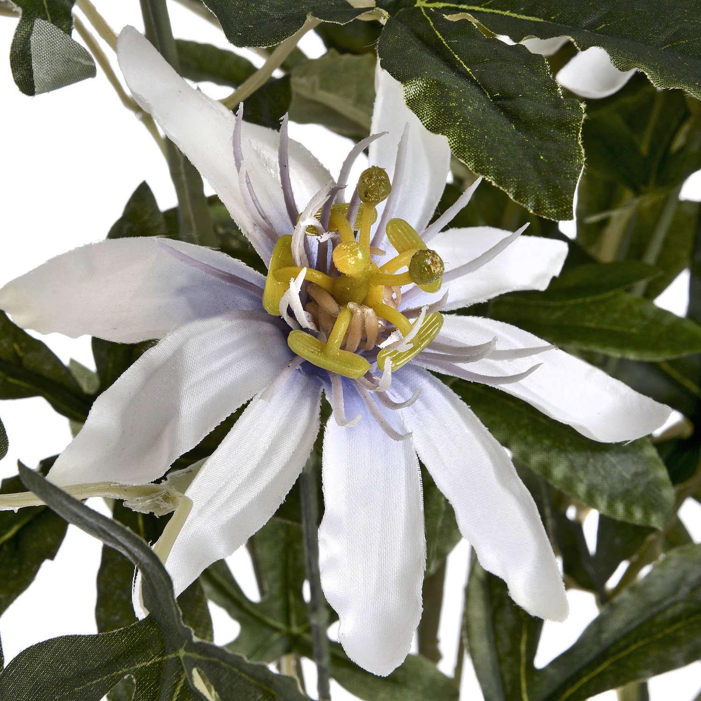 Passion Flower Spray